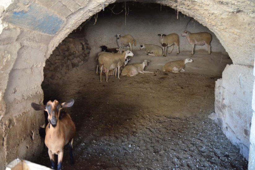Σπηλιά του Νικόλα, Ακρωτήρι, Σαντορίνη