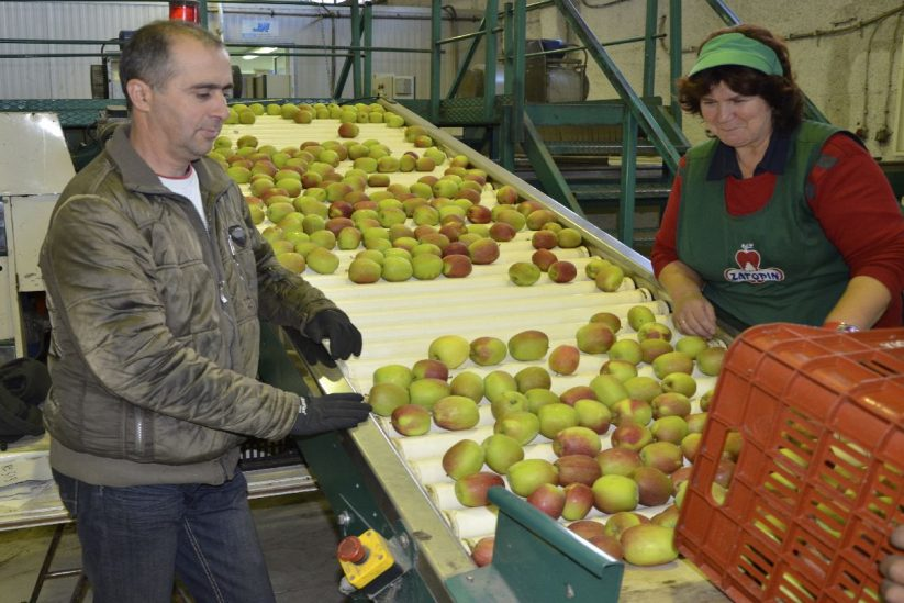 Μήλα Ζαγορίν - Αγροτικός Συνεταιρισμός Ζαγοράς Πηλίου