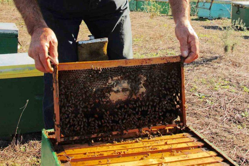 Η ζωή μέσα στην κυψέλη - Αφιέρωμα στο μέλι - Greek Gastronomy Guide