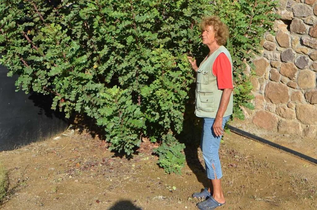 Κτήμα της Ελένης Κυπραίου στην Αίγινα