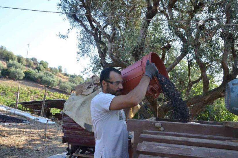 Μάκινα (μηχανή διαλογής σταφίδας) - Αιγιάλεια - Greek Gastronomy Guide