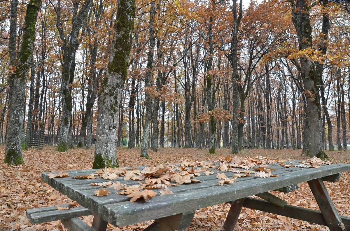 φωτογραφίες του φθινοπώρου