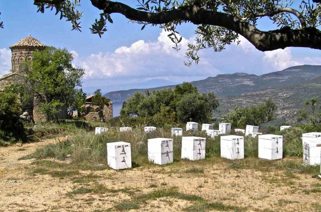 Η μελισσοκομία στην Ελλάδα - Ελληνικό μέλι: Παρόν και μέλλον - Greek Gastronomy Guide
