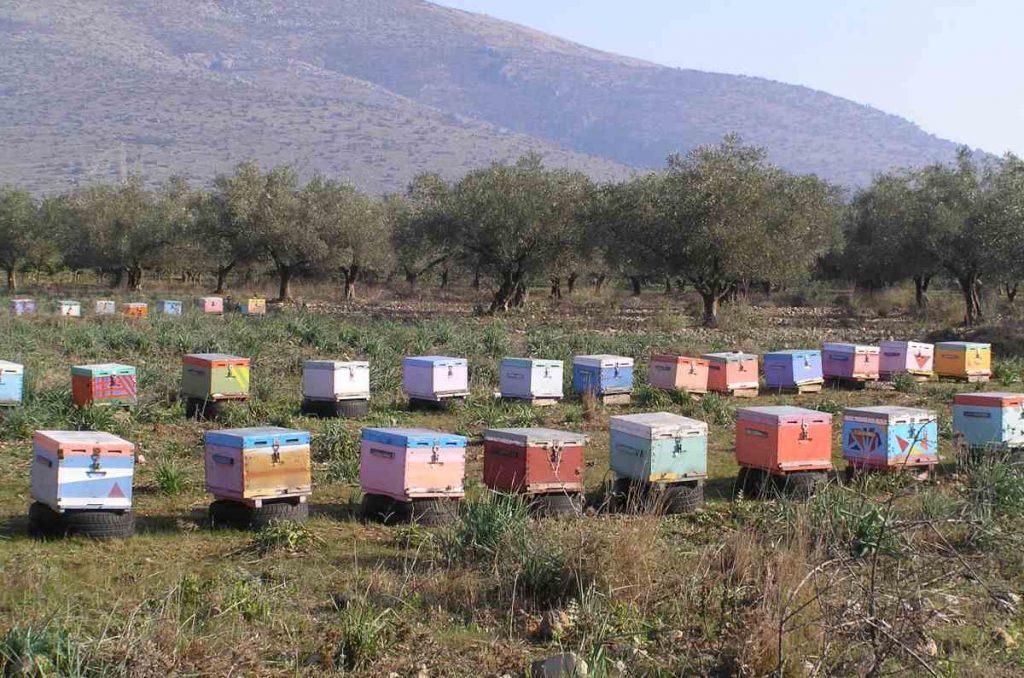 Το μέλι και η μέλισσα - Η προσφορά της μέλισσας στο οικοσύστημα - Greek Gastronomy Guide
