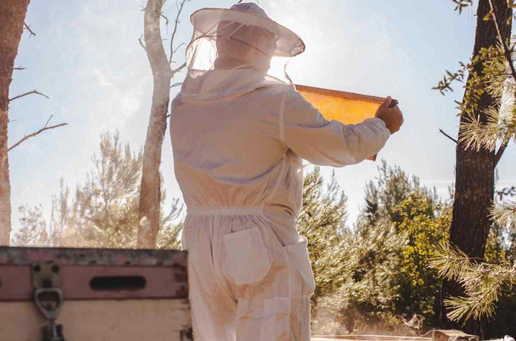 Τύποι μελιού: Ανθόμελα και δασόμελα - Greek Gastronomy Guide