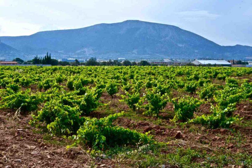 Κτήμα Βασιλείου - Κορωπί, Αττική - Greek Gastronomy Guide