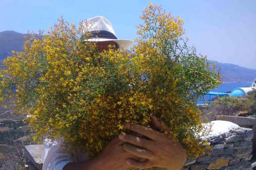 Aegean Herbs - Αμοργός - Greek Gastronomy Guide