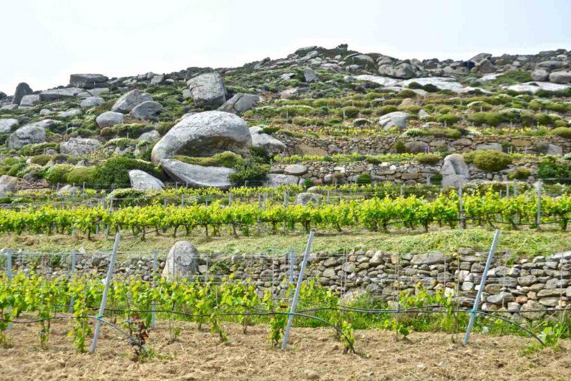 Volacus Wine - Φαλατάδος, Τήνος - Greek Gastronomy Guide