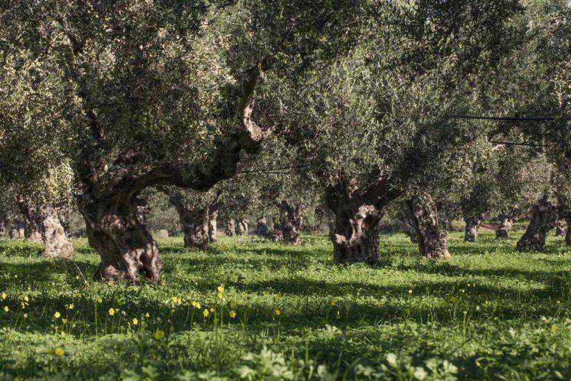 Lia Cultivators - Φιλιατρά, Μεσσηνία - Greek Gastronomy Guide