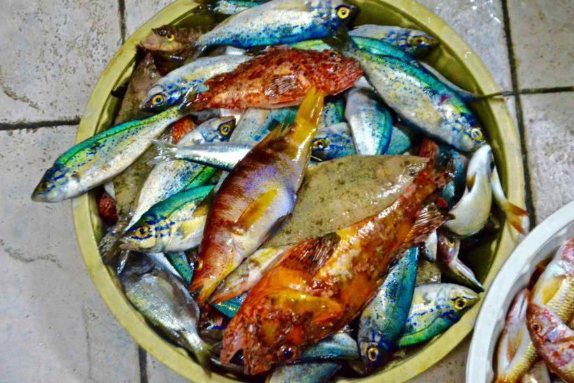 Δροσιά Καταρράκτης Χίου - Ψαροταβέρνα της Δάφνης - Greek Gastronomy Guide